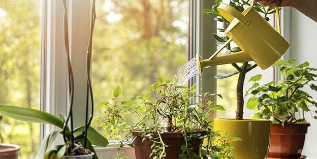 trucoshogar_plantas