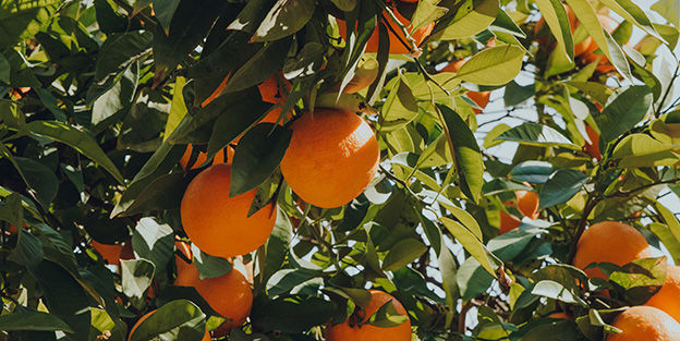 _naranjas